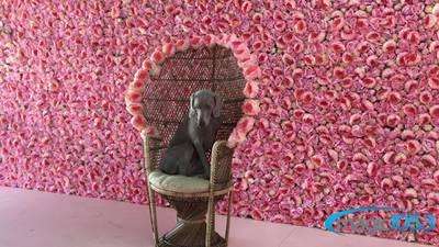 Visit The Flower Vault In San Antonio!