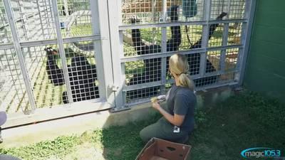 Support Primarily Primates!